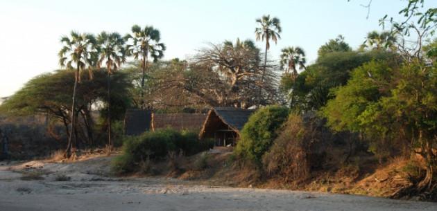 Photo of Mwagusi, Ruaha National Park