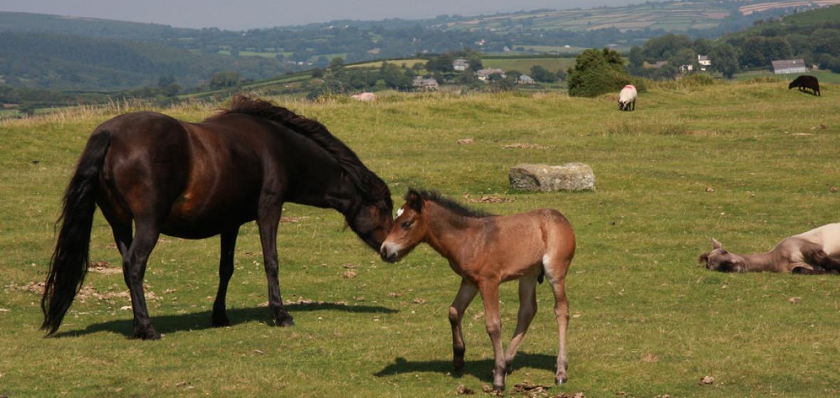 Photo of Dartmoor