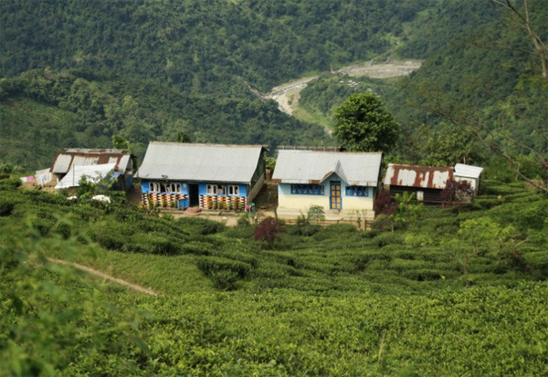 Photo of Makaibari Homestays