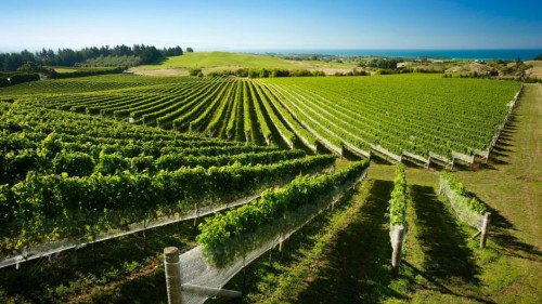 Hawke's Bay Vineyards