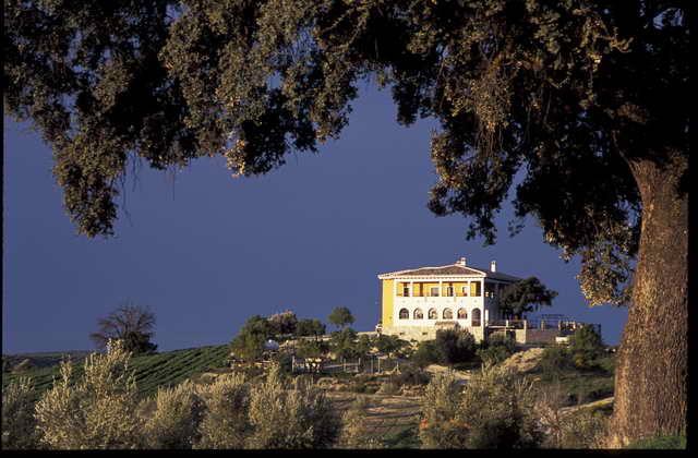 Photo of El Geco Verde