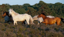 Why I Love.....Spending time in the New Forest.