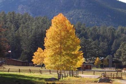 Northfork Ranch