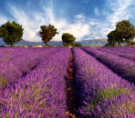 Postcard Perfect Provence: Where to stay in Rural Provence