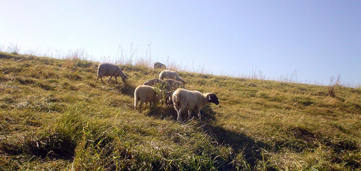 Photo of Geestland