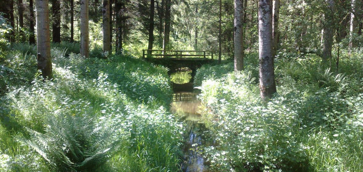 Photo of County Monaghan