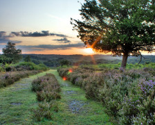 The Best Hotels in the New Forest