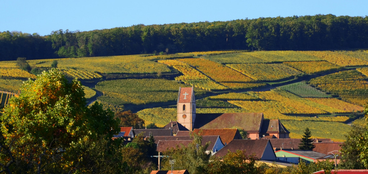 Photo of Alsace
