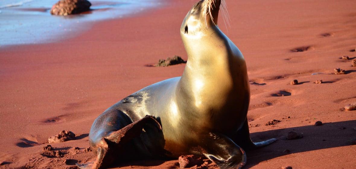 Photo of Galapagos Islands