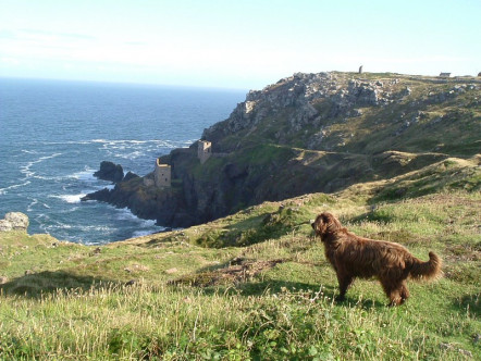 You Ll Find Dog Friendly Hotels In Wales Dotted Across The Beautiful Islands Off Welsh Mainland On Gower Peninsula Along Coasts Of
