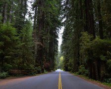 The Best Hotels for the Redwood National Park