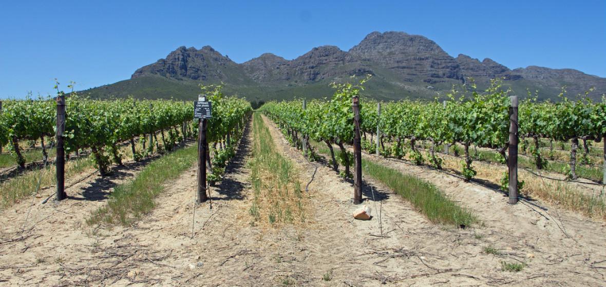 Photo of Stellenbosch