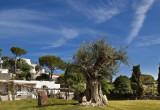 Garden and Villas Resort
