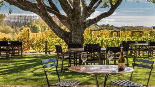Nelson vineyard