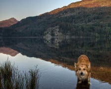 12 of the Best Hotels Dog Friendly Hotels in Wales