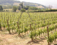 Wine hotels in the Veneto