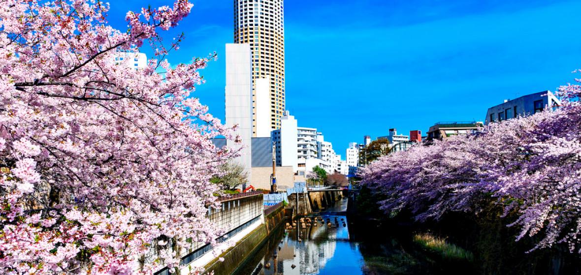 Photo of Japan
