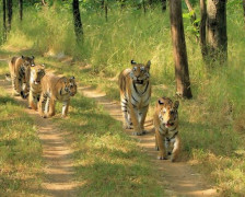 Best places to stay in the Pench Tiger Reserve