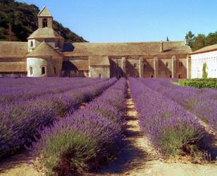 Photo of Provence