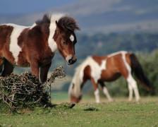 The 15 Best hotels in Dartmoor National Park