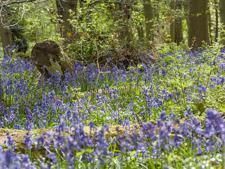 Photo of Buckinghamshire