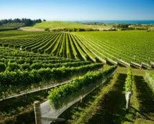 Wine hotels in Hawke's Bay