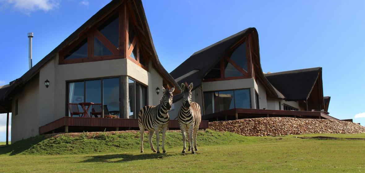 Photo of J-Bay Zebra Lodge
