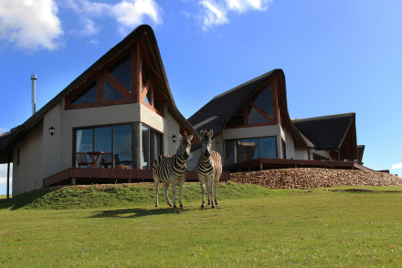 J-Bay Zebra Lodge