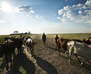 Photo of Zambia