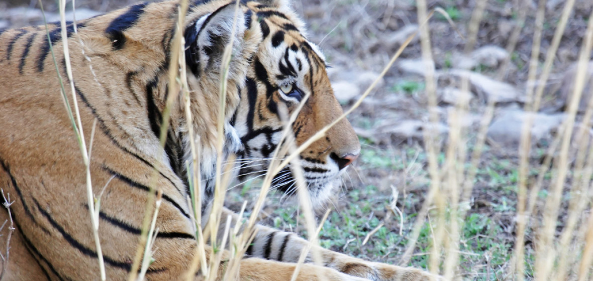 Photo of Sawai Madhopur