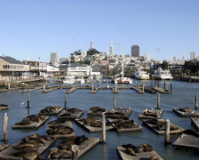 The Best Hotels Near Fisherman's Wharf, San Francisco