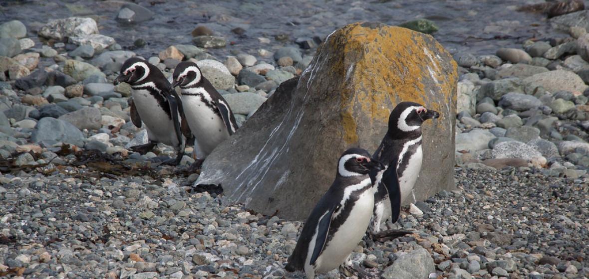 Photo of Punta Arenas
