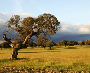 Photo of Extremadura