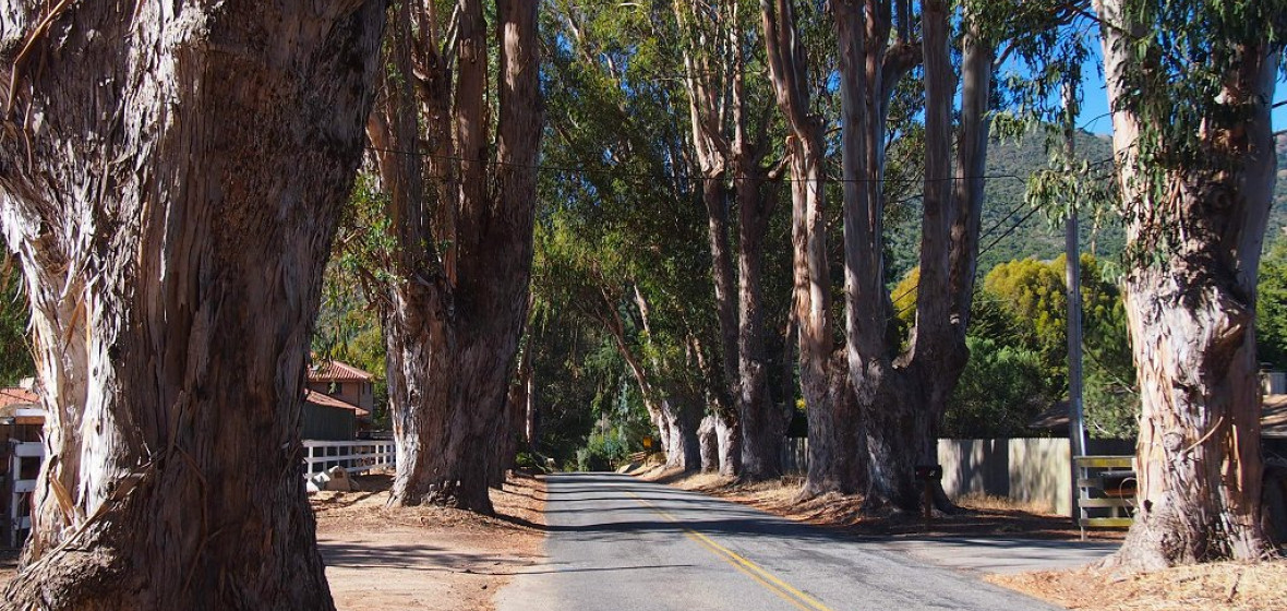 Photo of Carmel Valley