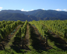 Wine Hotels in Marlborough