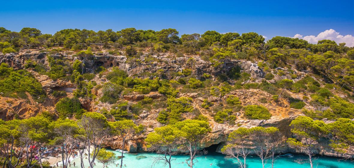 Photo of Selva