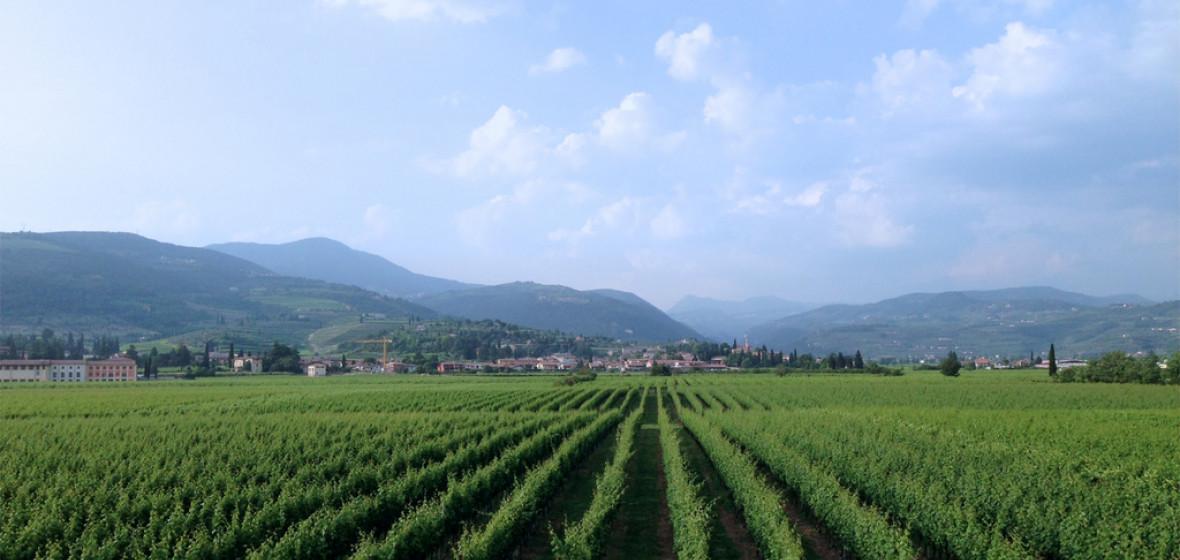 Photo of Valpolicella