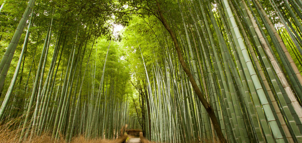 Photo of Kyoto