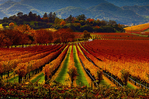 With The Very Best Wine Hotels In Napa Valley Pitching Everything So Perfectly For Relaxation And Enjoyment It S Easy To See Why They Receive Around