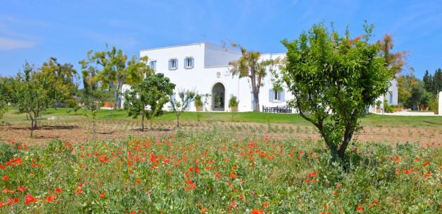 Photo of Masseria Montelauro
