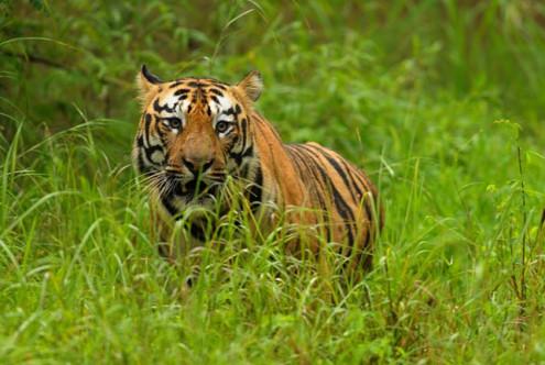 Tadoba Tiger Reserve