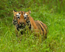 Best places to stay in the Tadoba Tiger Reserve