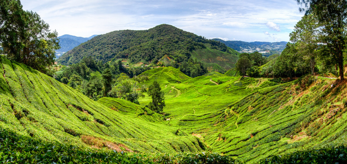 Photo of Cameron Highlands