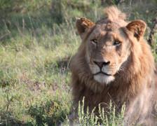 30 Best Hotels near the Kruger National Park