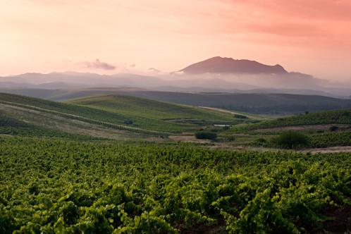 Sicily vineyard