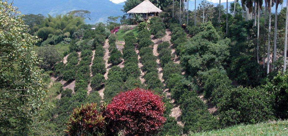 Photo of Quimbaya