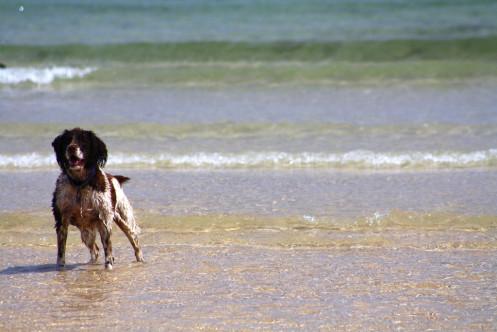 Dog Friendly Hotels In Cornwall