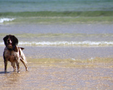The 10 Best Dog Friendly Hotels in Cornwall