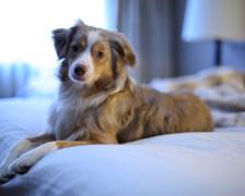 The 8 Best Pet Friendly Hotels in San Antonio
