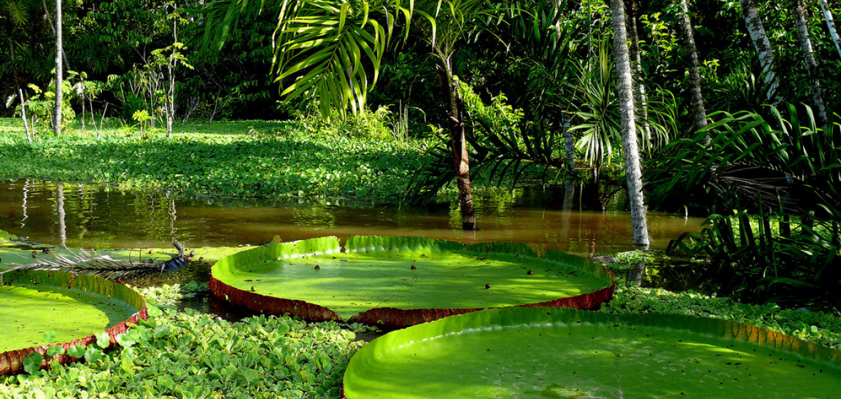 Photo of Amazonas